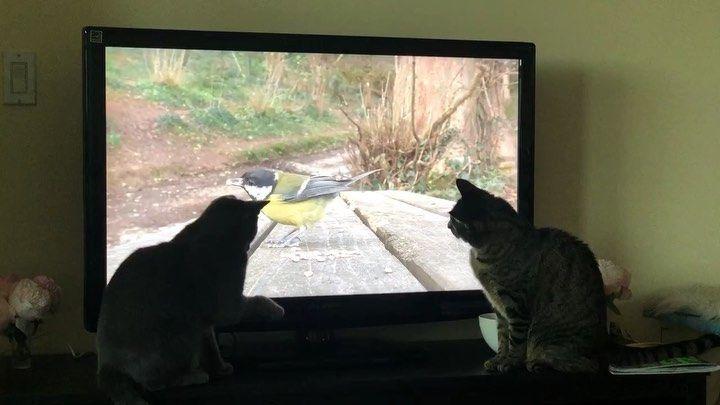 Netflix & chill... heard gamechangers was cool? Nooooh I wanna watch 8 hours of bird footage Instagram Bridge Netflix & chill... heard gamechangers was cool? Nooooh I wanna watch 8 hours of bird footage