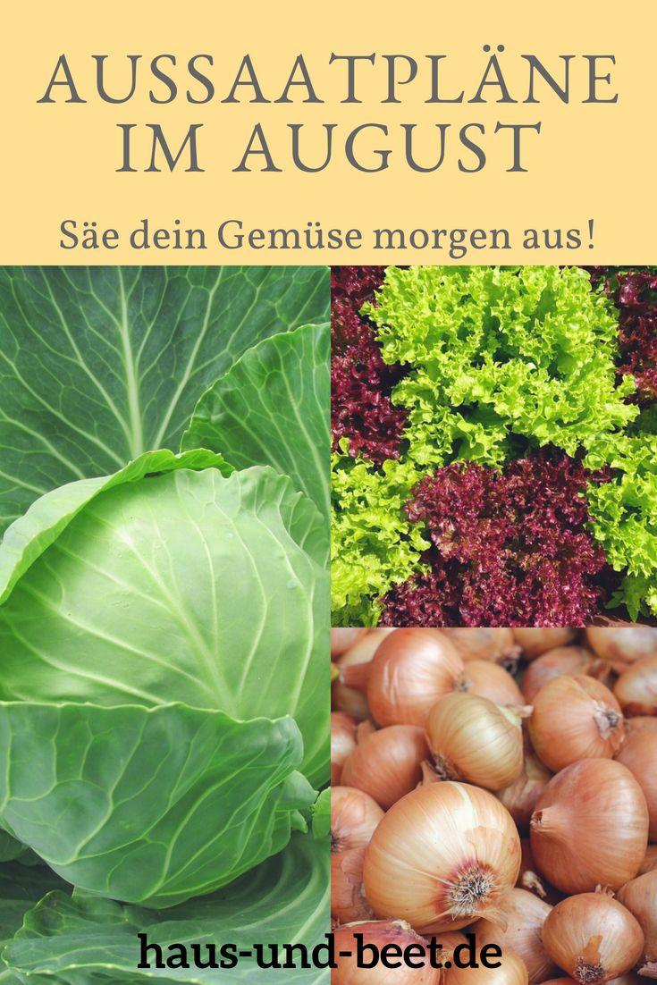 Photo of Aussaatpläne im August – Baue Gemüse morgen an! – Haus und Beet