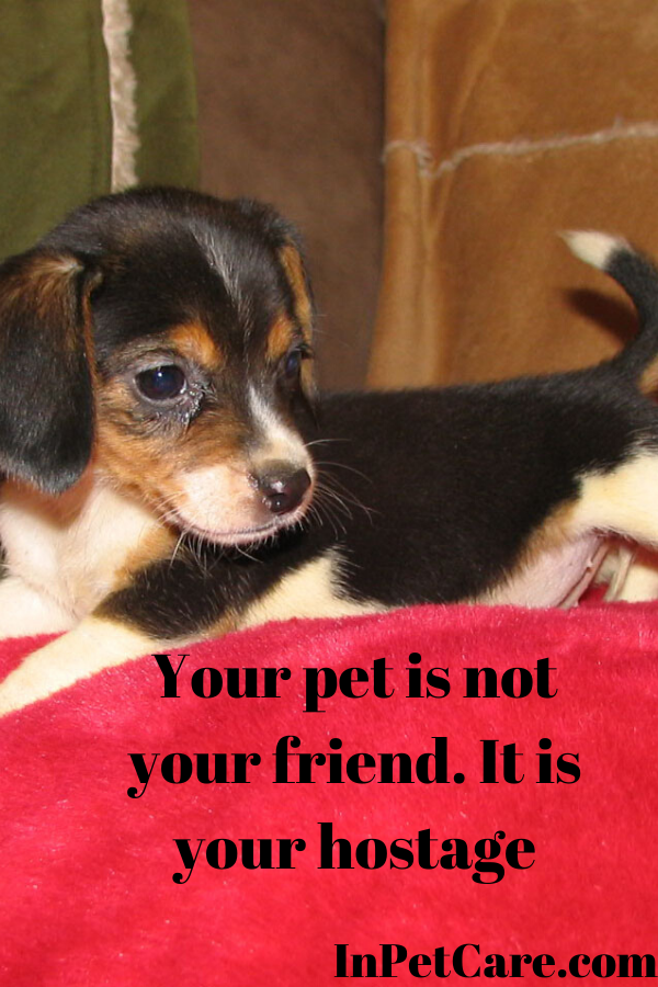 Your Pet Is Not Your Friend It Is Your Hostage Tags Dog Care Dog Care Near Me Dog Daycare Portland Dog Care Trai Puppy Biting Dog Care Center Cute Dog Quotes