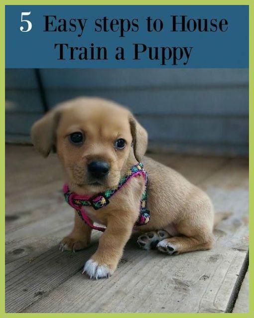 Pin On Puppy Toilet Training