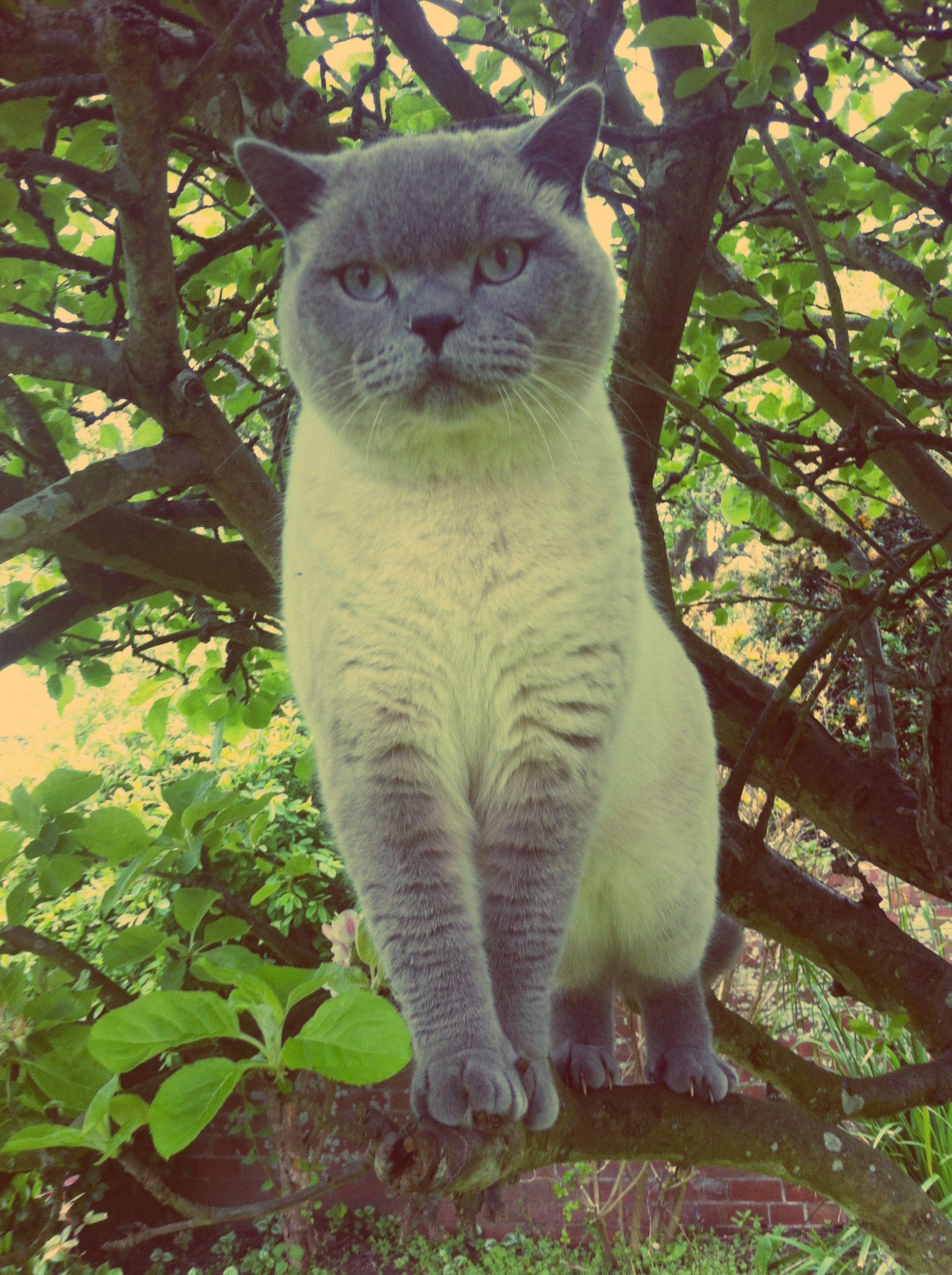 Just Like Leo Animals Cat Pics Cats