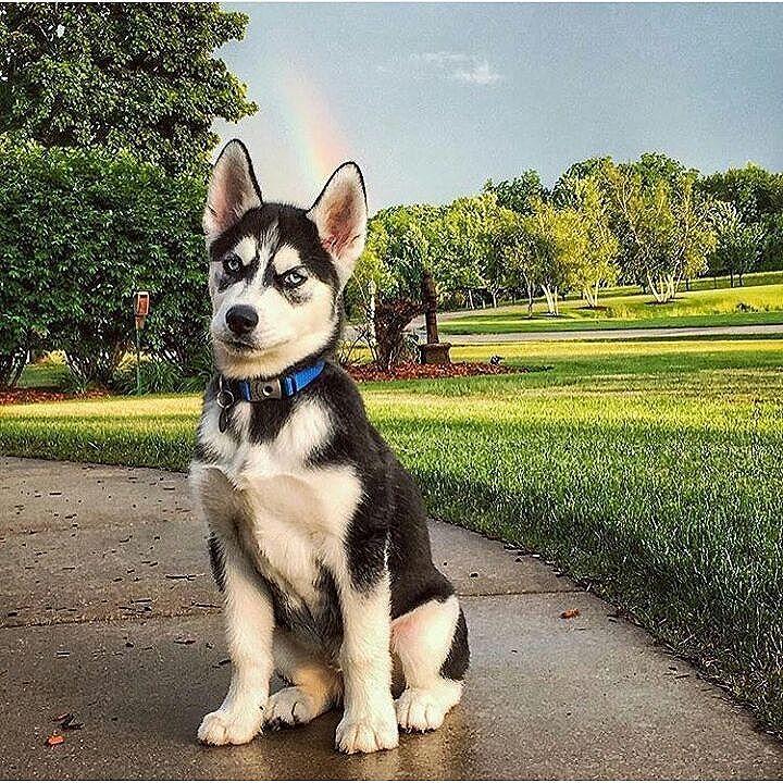 Tag someone that loves it ilovemydog dogslife