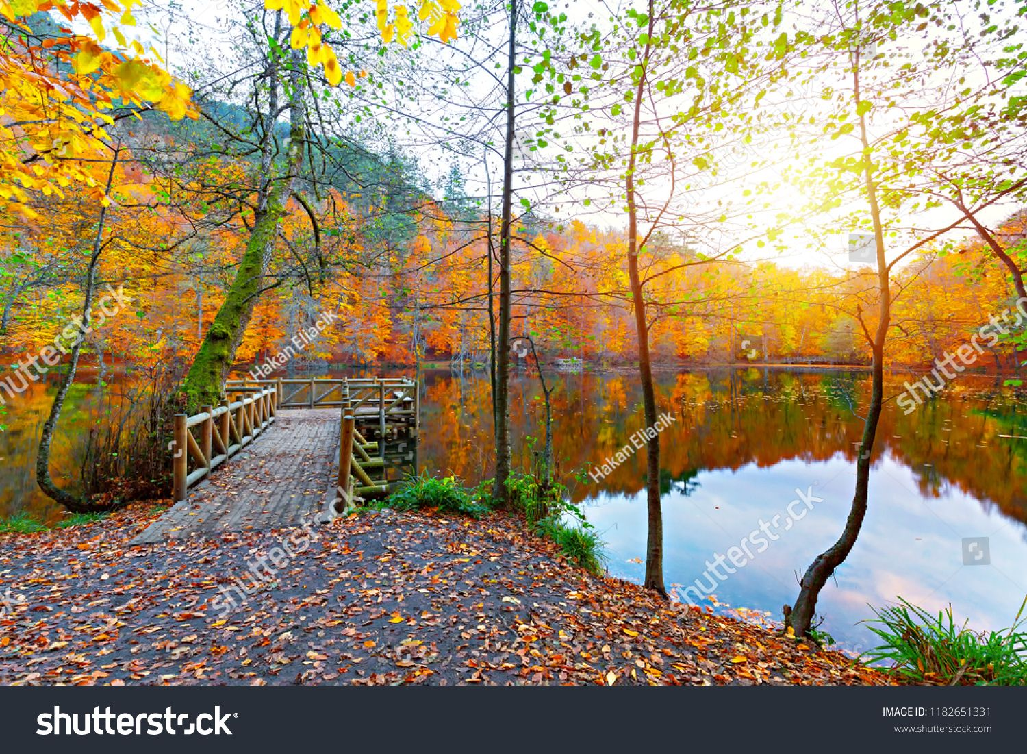 Beautiful Autumn Views Of Buyuk Lake In Yedigoller National Park Reflection Of Trees Wooden Pier Colored Leaves Falling Le Stock Photos National Parks Lake