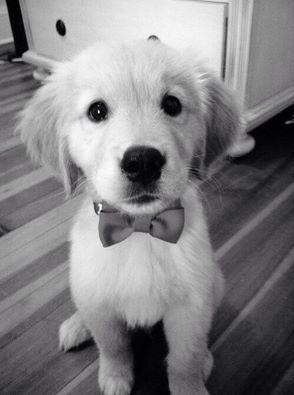 Cão! #FOFURA