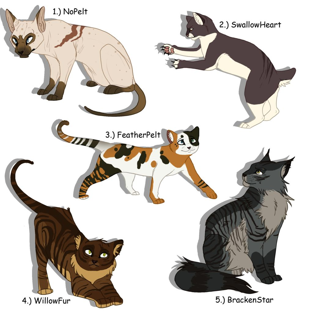 Warrior cat adoptables | Warrior cat | Pinterest | Inspiration