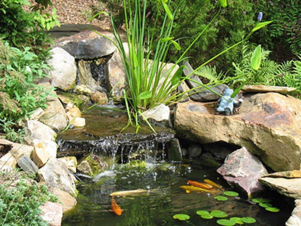 Waterfall in garden fish pond fish shrimp and jellyfish for Garden fish ponds