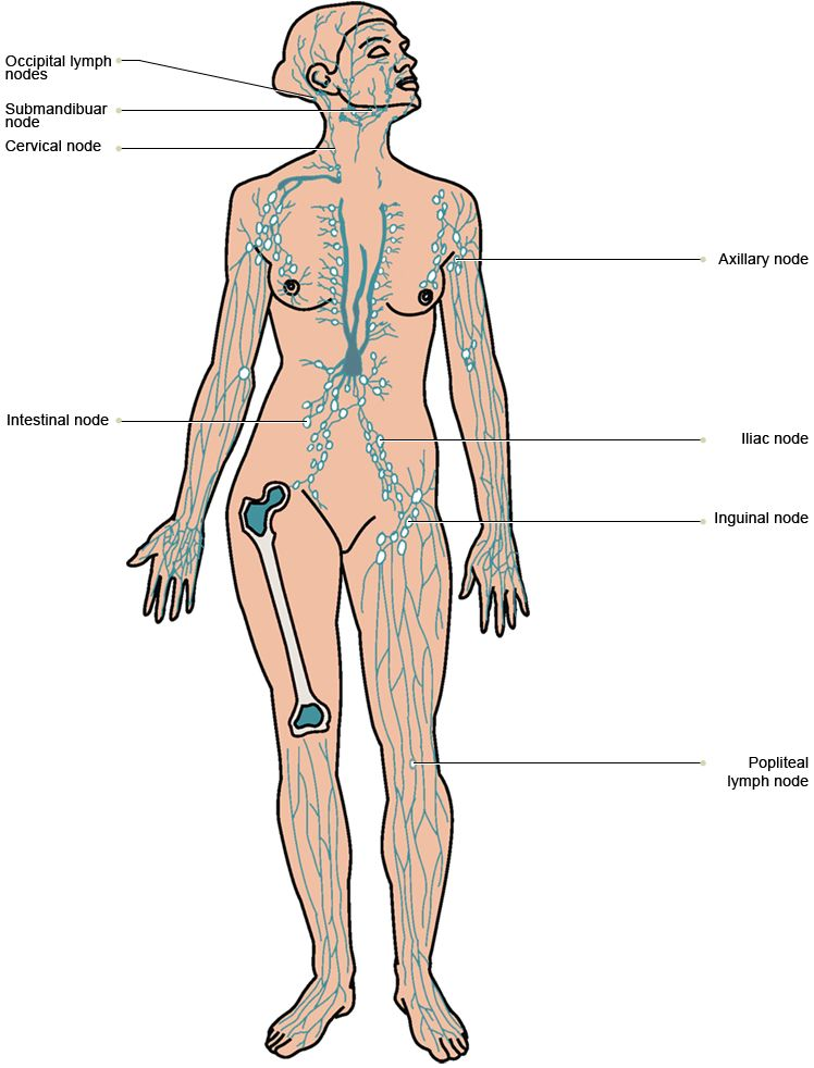 Vtct Location Of The Lymph Nodes In The Body Gems Pinterest