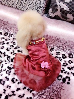 Honeystore Satin with Bowknot Pincess Ball Gown Dog Dresses (X-large ...