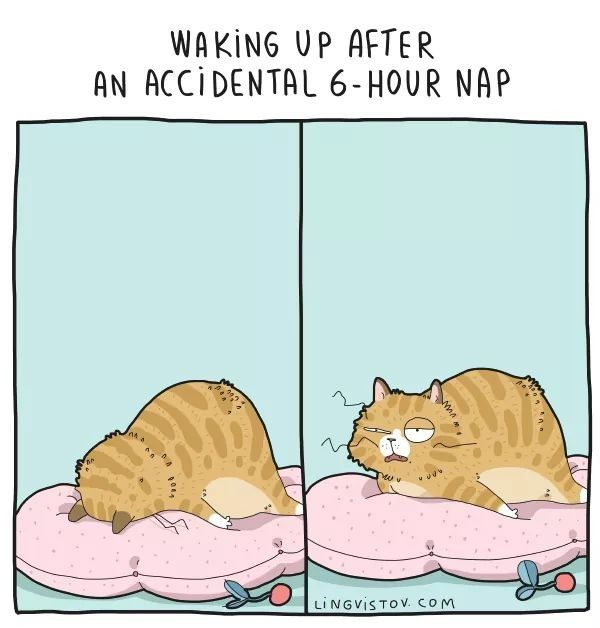 Pin Von Patti Jo Espresso Auf Bedtime Lustig Illustration Katze