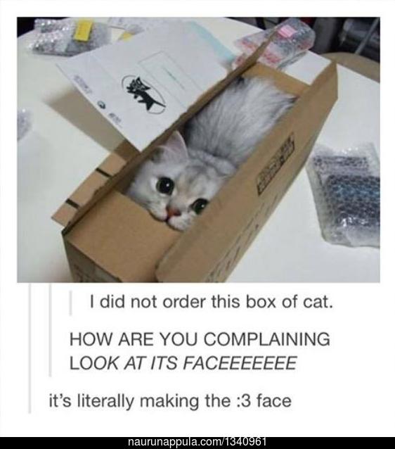 kissa - hauskat kuvat - Naurunappula