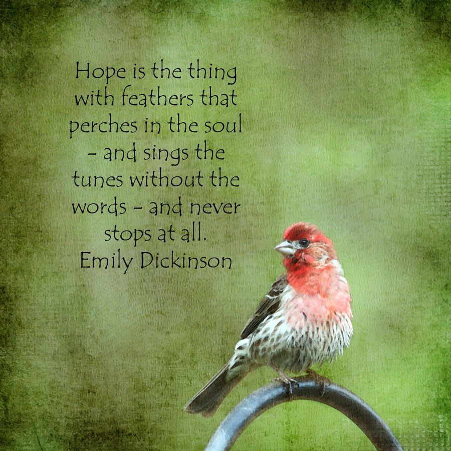 Red Cardinal Pics With Quotes Quotesgram By At Quotesgram Quotes