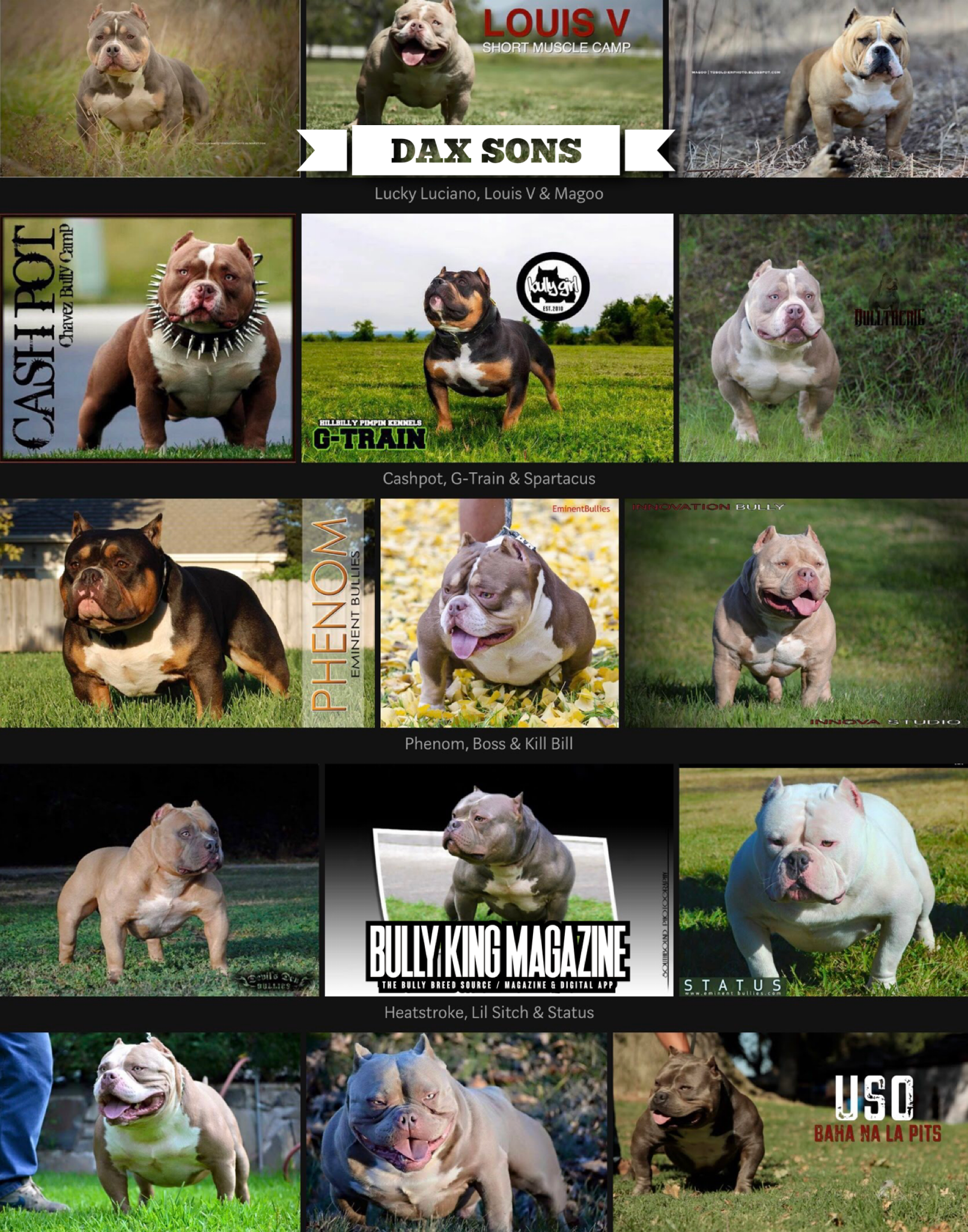 Some of Dax's Best Sons | Bully King Magazine | Kangal dog, Bullying