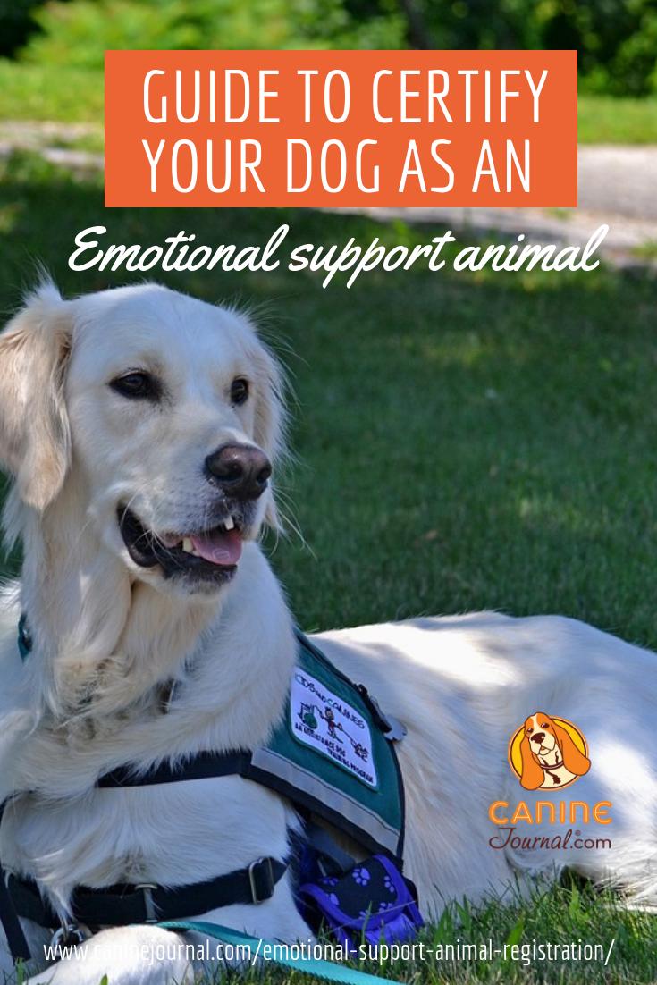 How To Register A Service Dog >> Legitimate Emotional Support Animal Registration Emotional