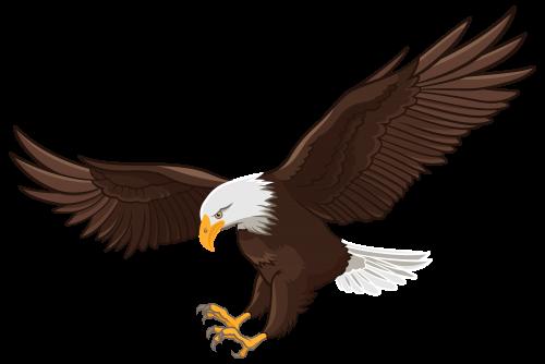 eagle png clip art camping pinterest clip art eagle and bird rh pinterest com bald eagle clip art free bald eagle clip art free