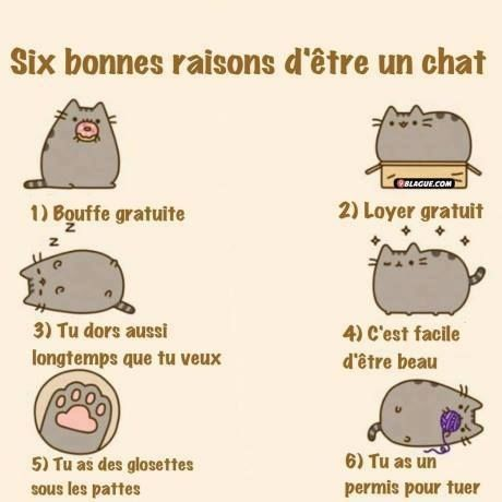 Images six bonnes raison d 39 tre un chat images dr les - Dessin chat humour ...