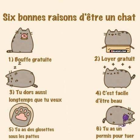 Chat Humoristique Dessin images six bonnes raison d'être un chat images drôles dessin