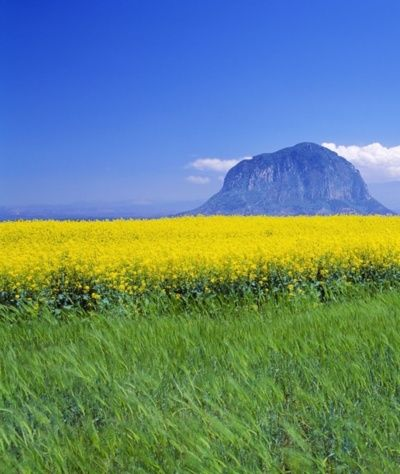 Flower Fields Underneath Sanbang Mountain On Jeju Island South