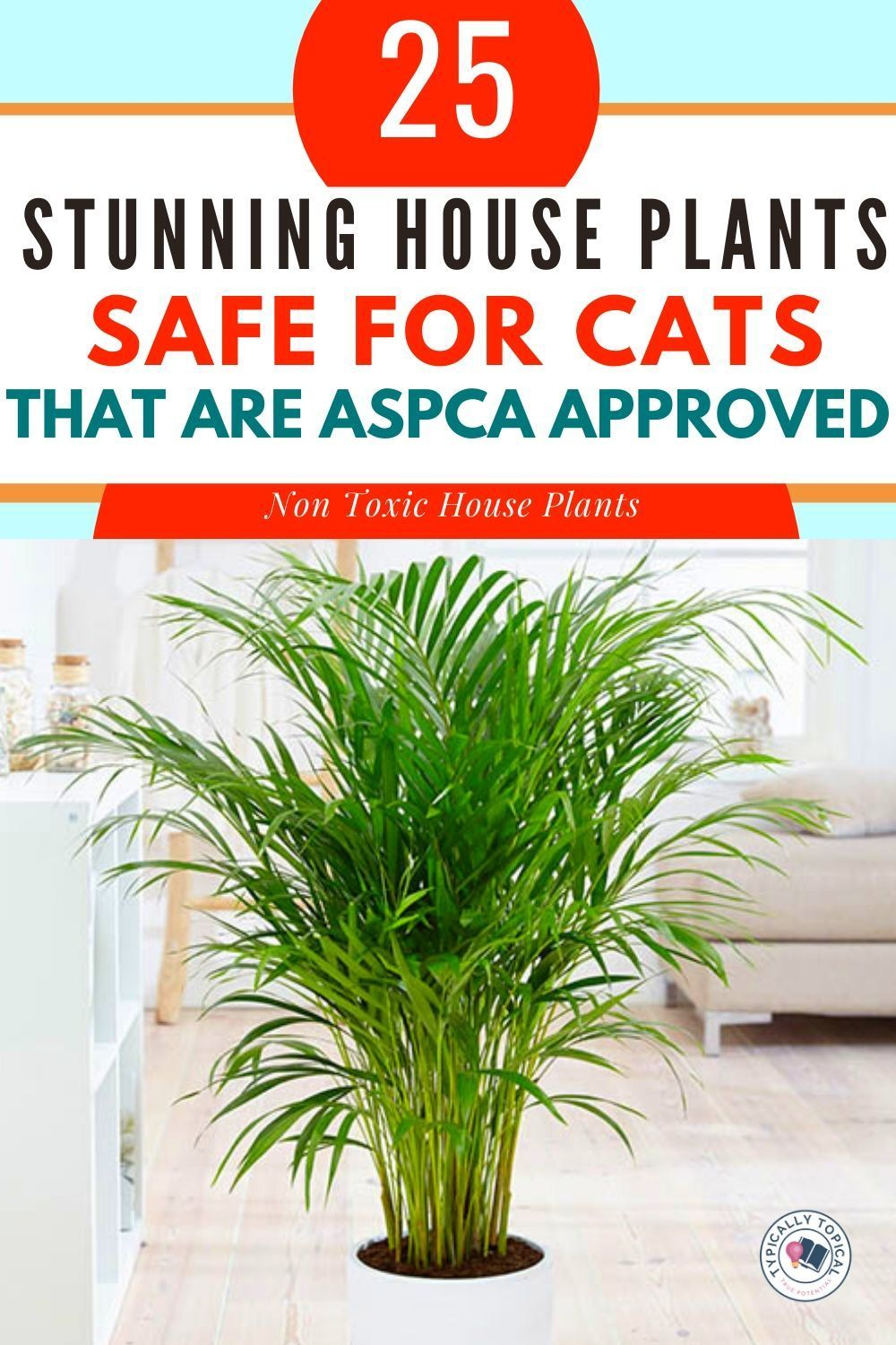 25 Gorgeous Houseplants That Are Safe For Cats And Dogs Aspca Approved Typically Topical In 2020 Houseplants Safe For Cats Houseplants Pet Safe
