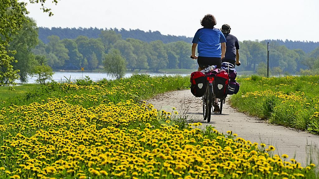 Have you ever been biking through a landscape full of blooming dandelions? There are these rare days when going out on a photo trip yields a constant flow of enjoyable results. My bike tour along the River Elbe from Hitzacker to Damnatz today was such a day of flourishing perfomance. …