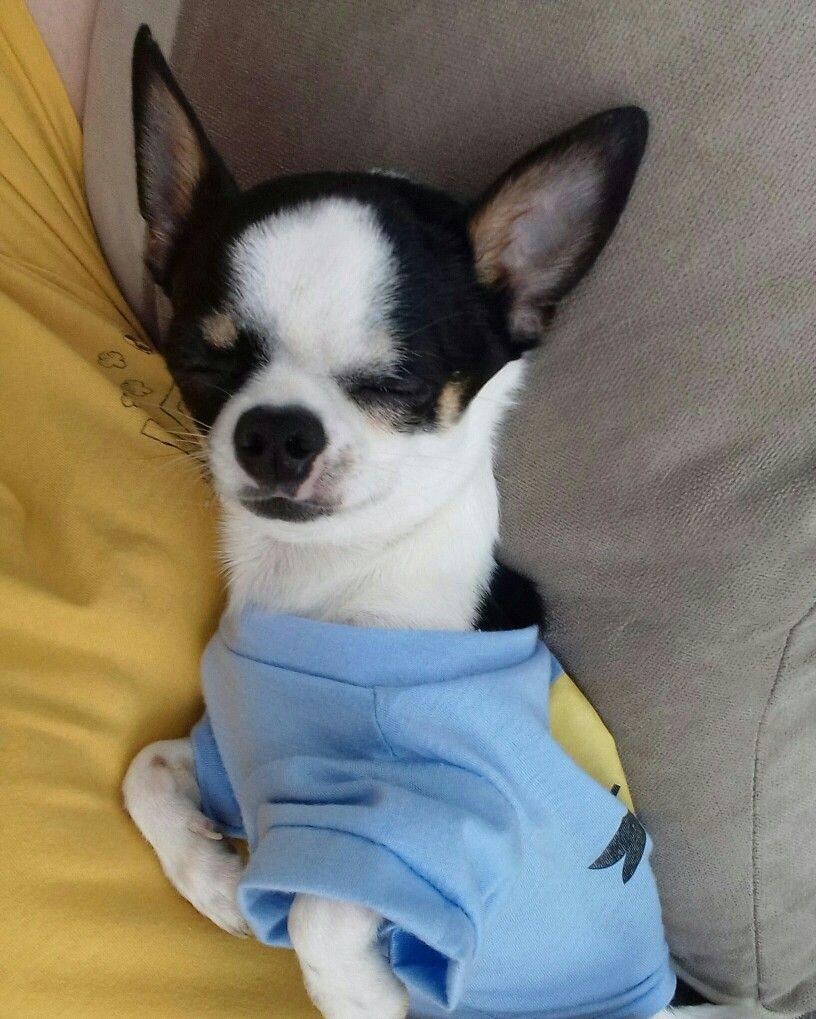 Pinterest catherinesullivan cute puppies pinterest dog