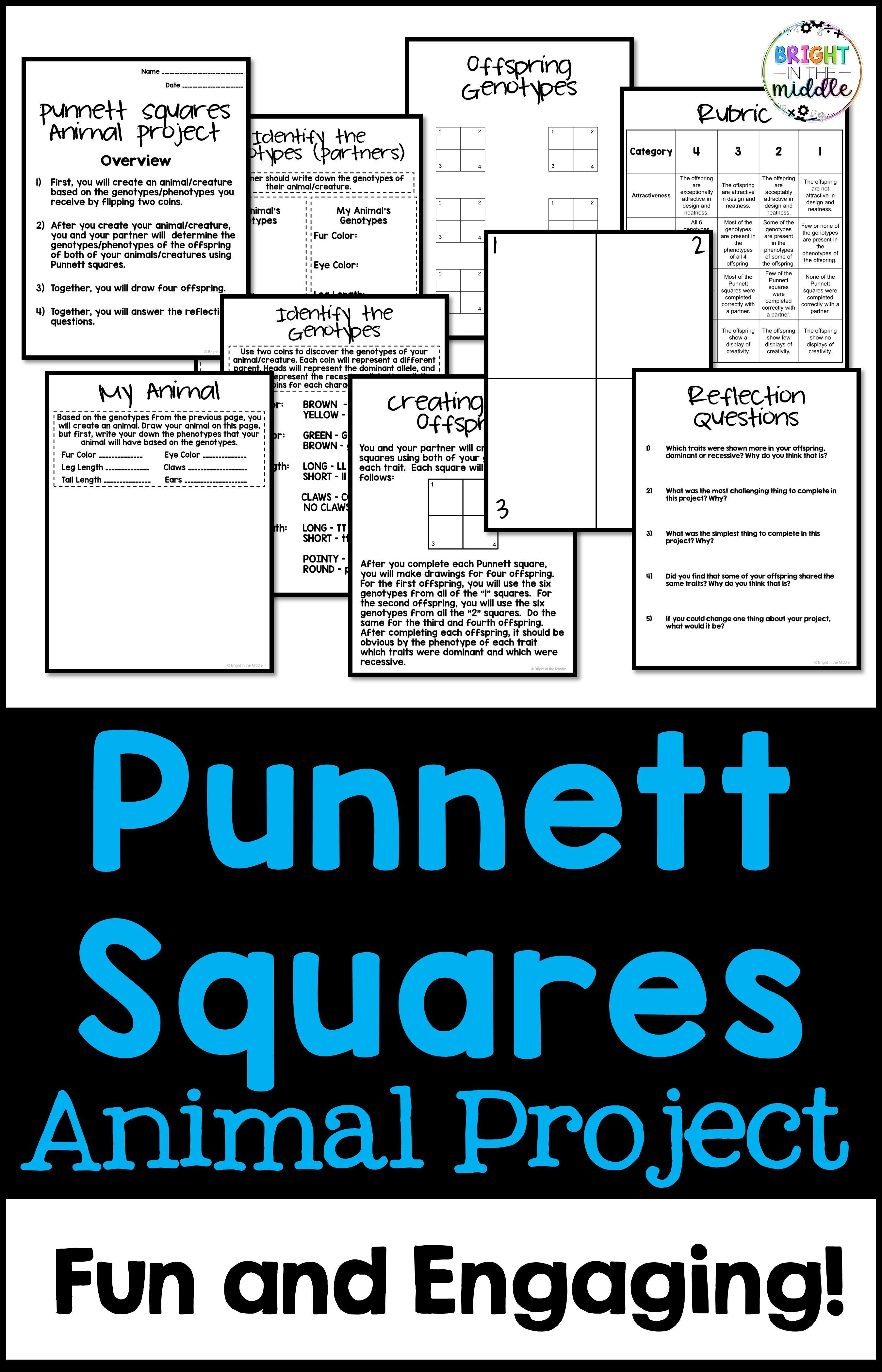 Punnett Squares Middle School Animal Project In