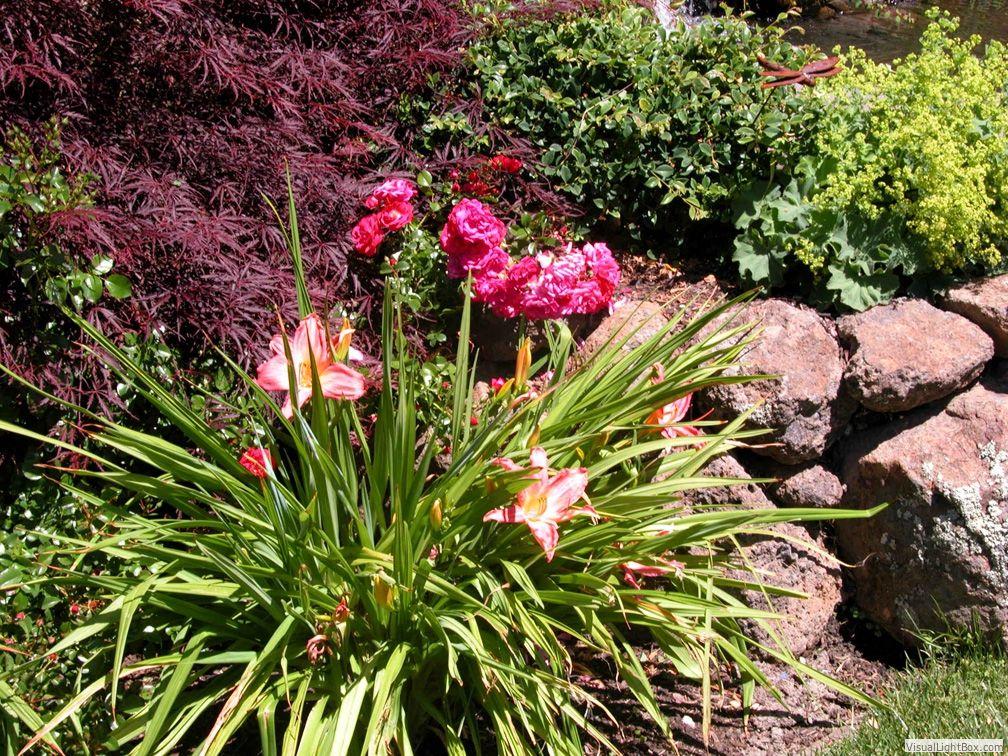 Garden lights landscape design lamorinda lafayette orinda moraga piedmont walnut