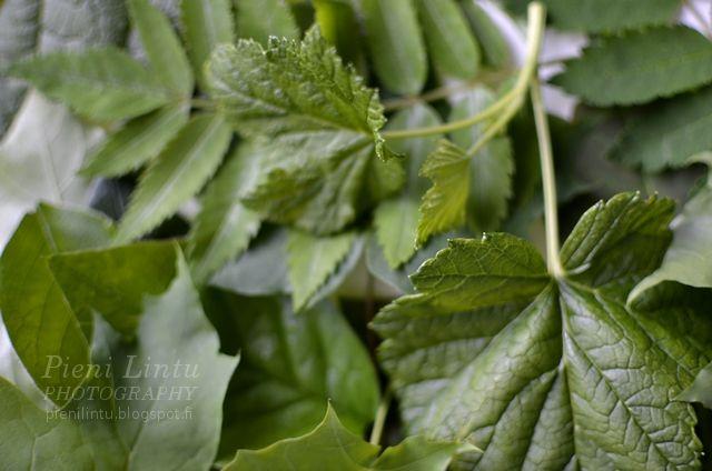 http://pienilintu.blogspot.fi/2013/07/color-inspiration-green-tones.html