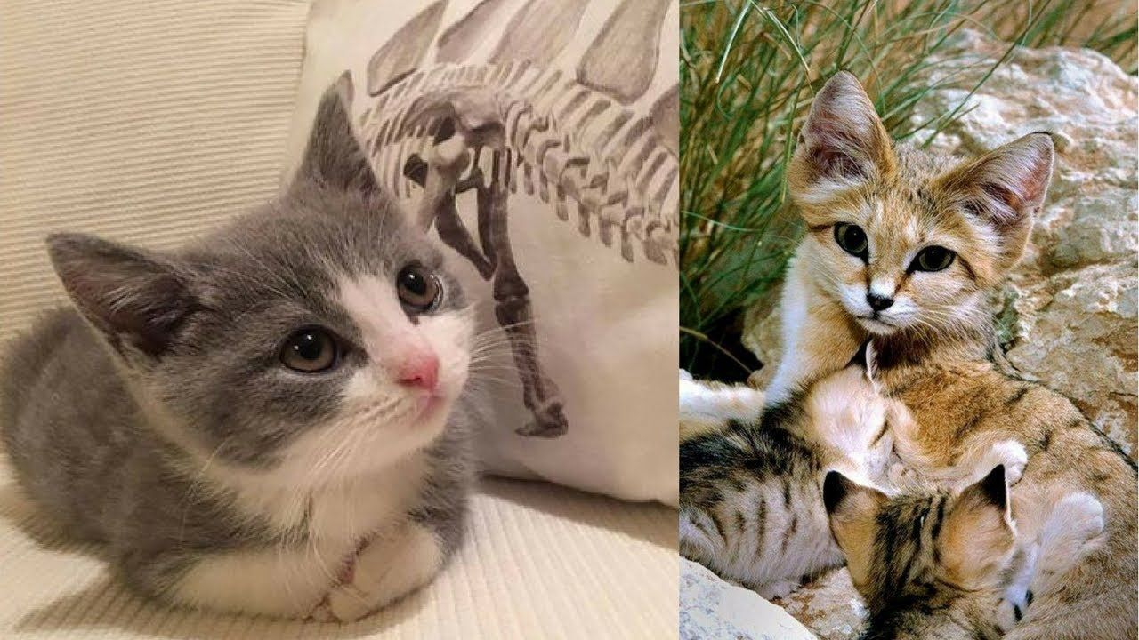 Best Cute Cat Videos Ever Funniest Cats And Kittens