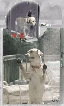 Absolutely Amazing Pet Screen Doors Saves Family Pets Petscreen Doors Dogs  Cats Approved