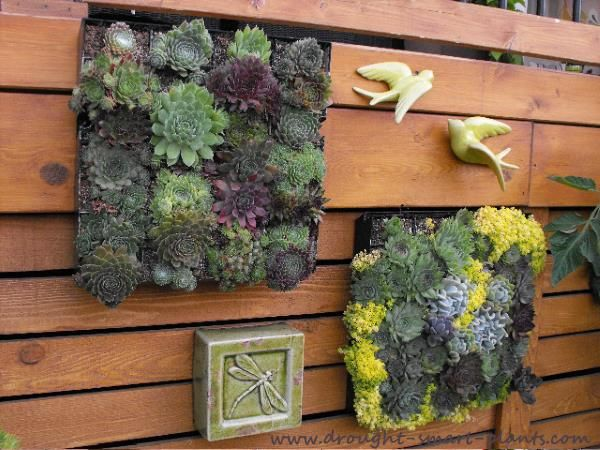 Start Your Own Succulent Plant Business; Learn How Here.
