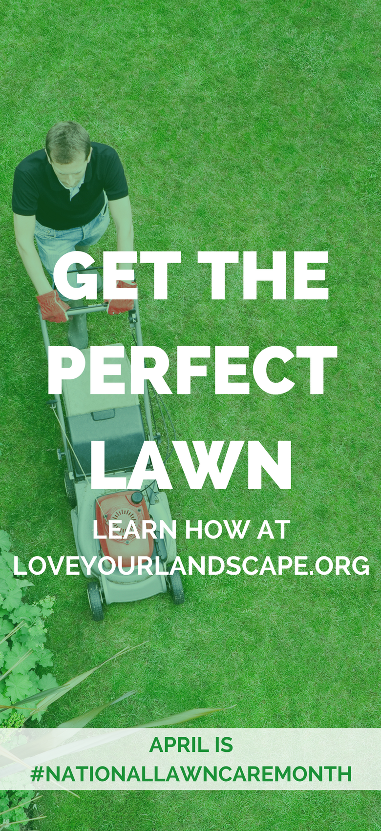 BEST tips from the pros on how to get your dream, green lawn