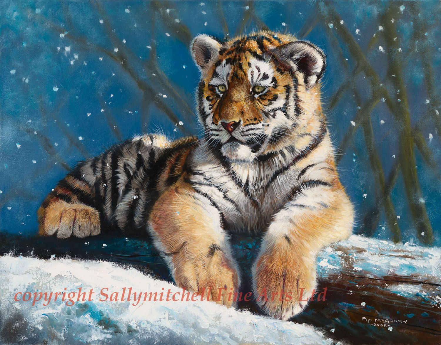 African Tiger, Wildlife Christmas Cards Pack Of 10 By Pip Mcgarry ...