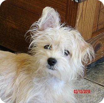 Find Your Perfect Pet Terrier Mix