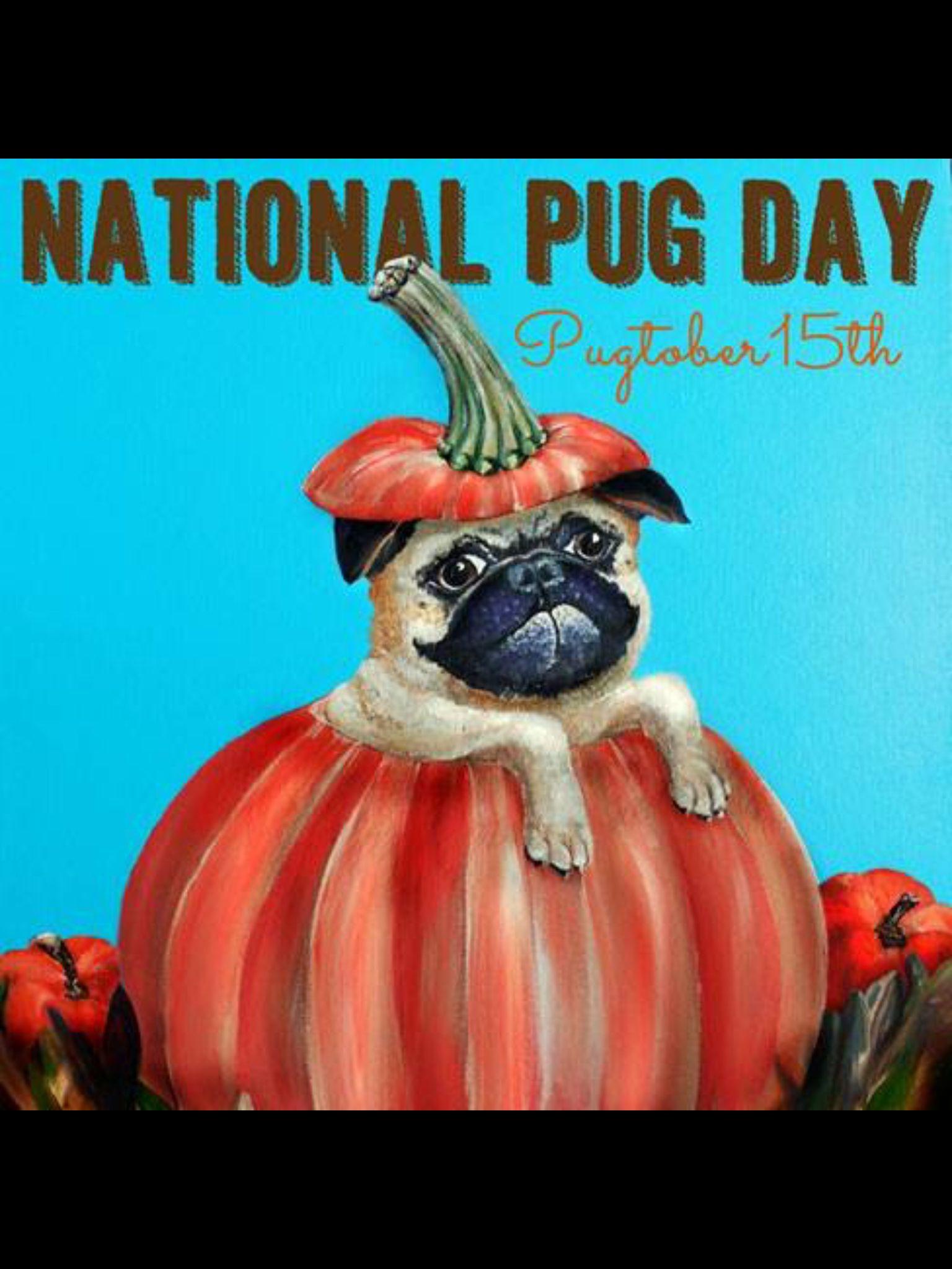 October 15th Pug rescue, Pugs, Cute pugs