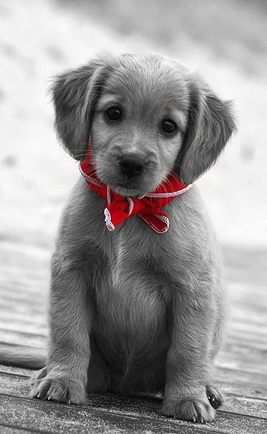Adorable Cute Animals Cute Dogs Puppies