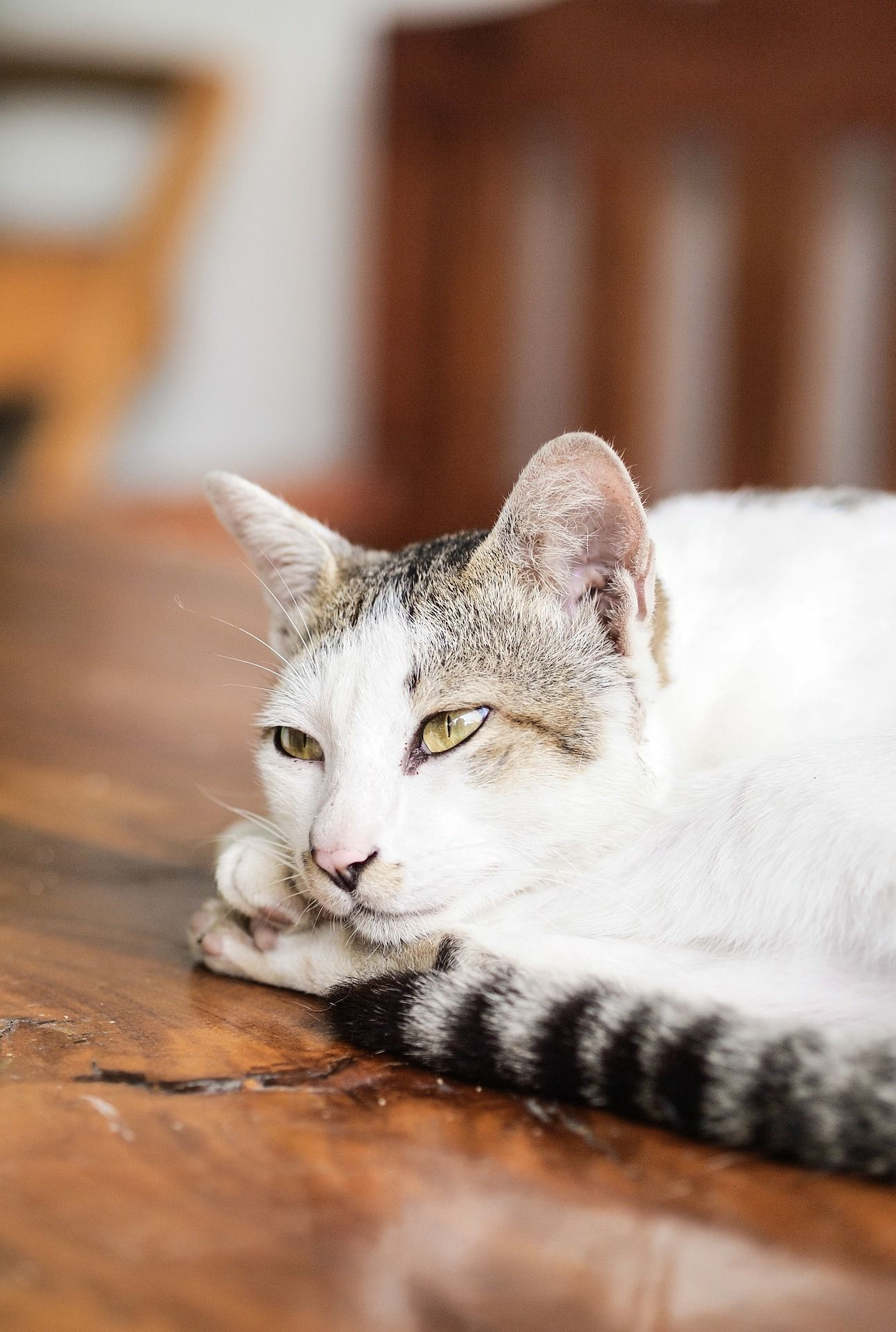 Have Questions About Cats Get Some Answers Here Saleprice 37 Cat Rescue Pet Travel Cat Care