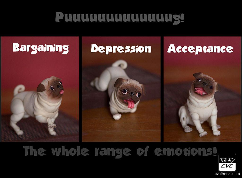 Pug Life 2 By Bjd Pets Dolls Evethecat Com Pugs Pug Life Pets