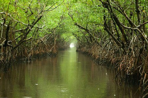 Αποτέλεσμα εικόνας για 5. Εθνικό Πάρκο Everglades - ΗΠΑ
