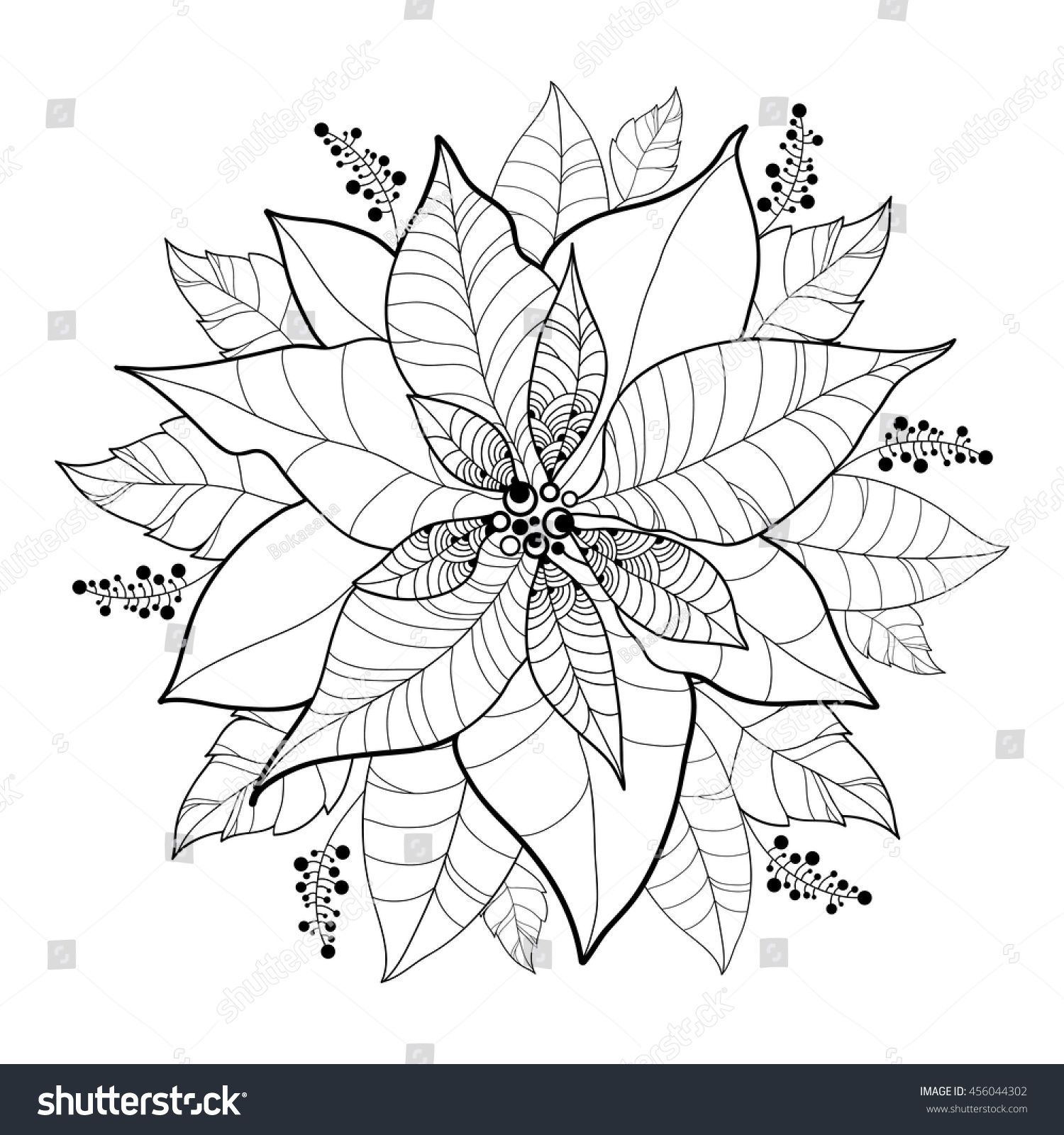 Vector Poinsettia Flower Or Christmas Star In Black Isolated On White Outline Flower And Leaves Of P Poinsettia Flower Christmas Coloring Pages Flower Doodles