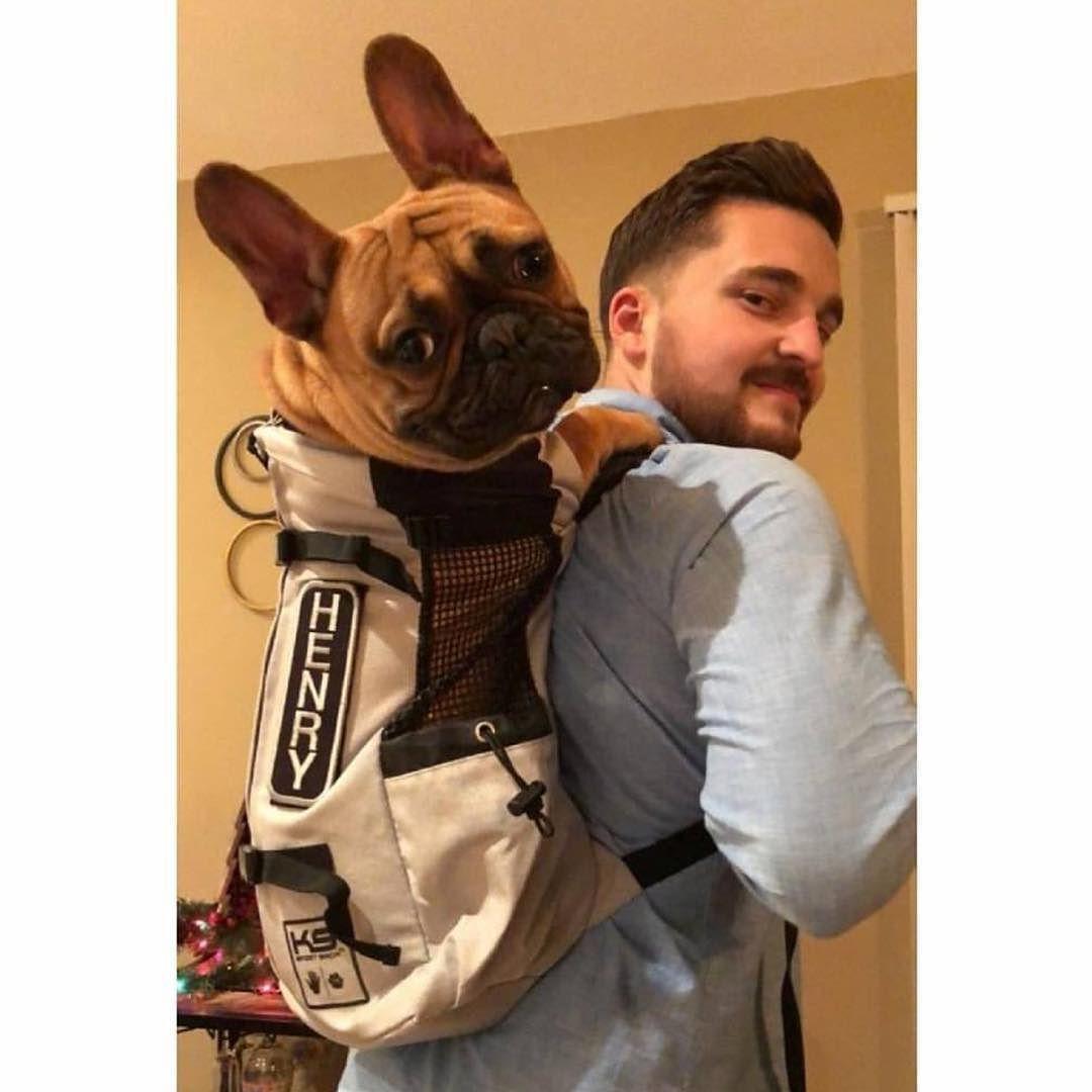Hi Henry tyashwood k9sportsack nodogleftbehind Dog