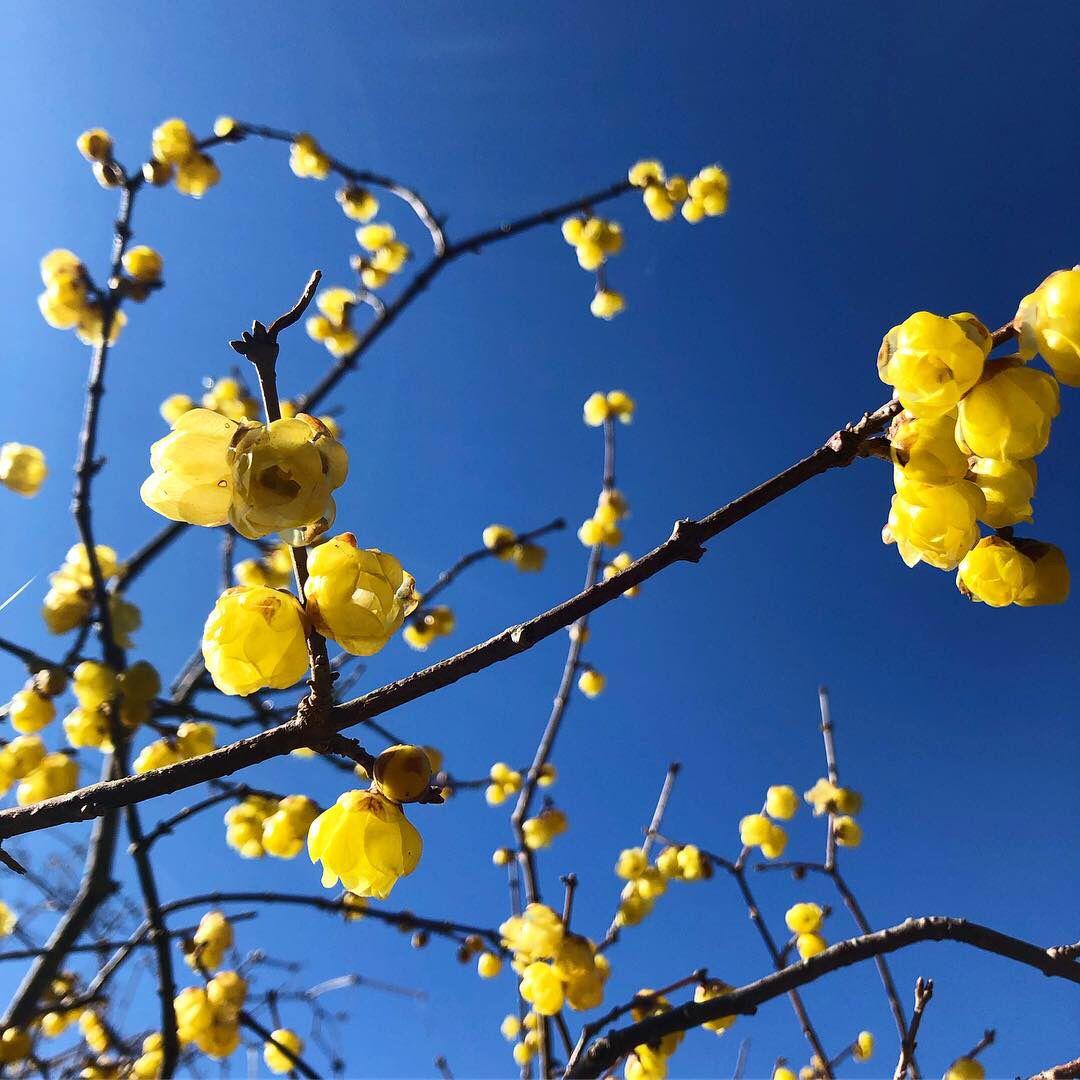 「1月中旬 花」の画像検索結果