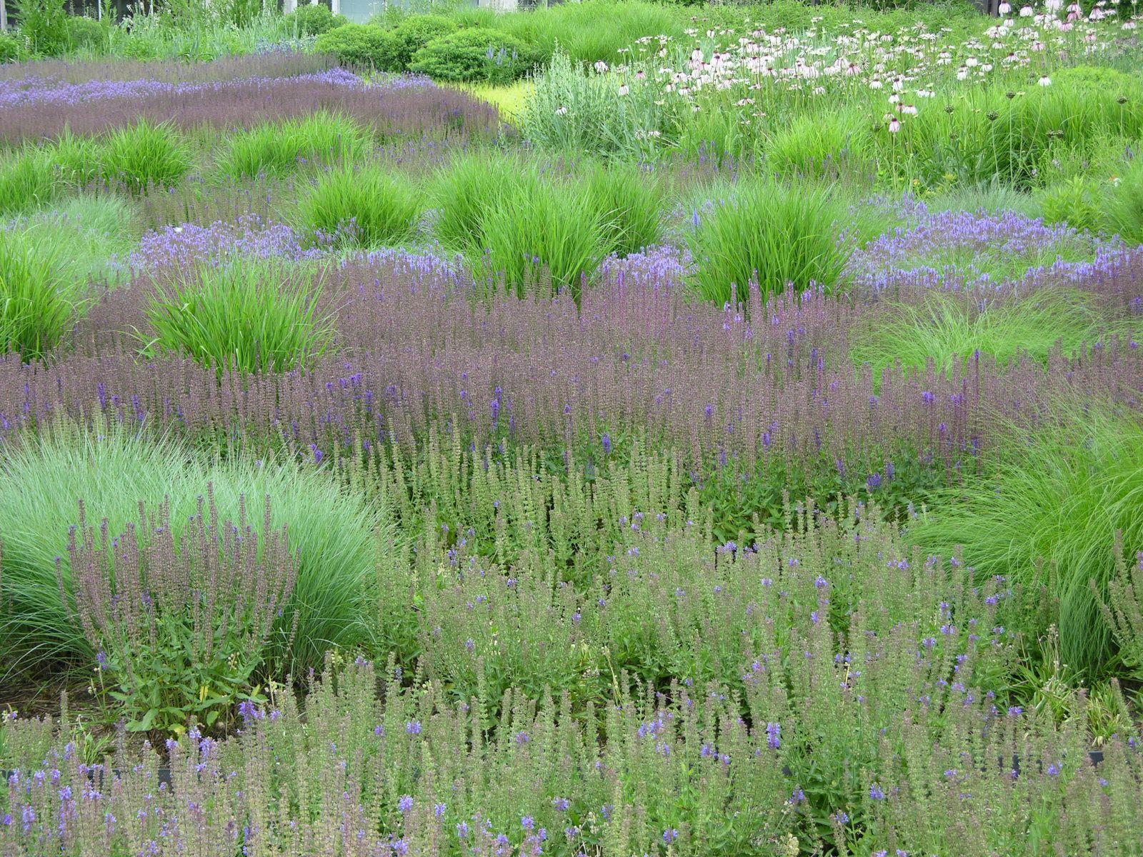Project lurie garden millenium park location chicago for Piet oudolf pflanzen