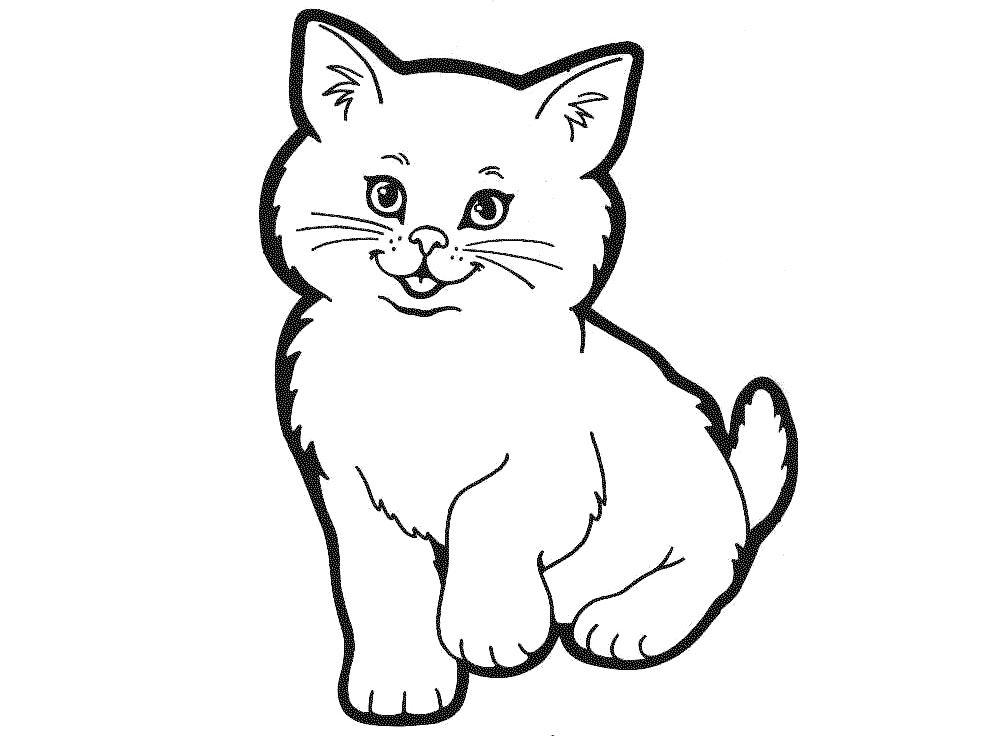 Online kočky