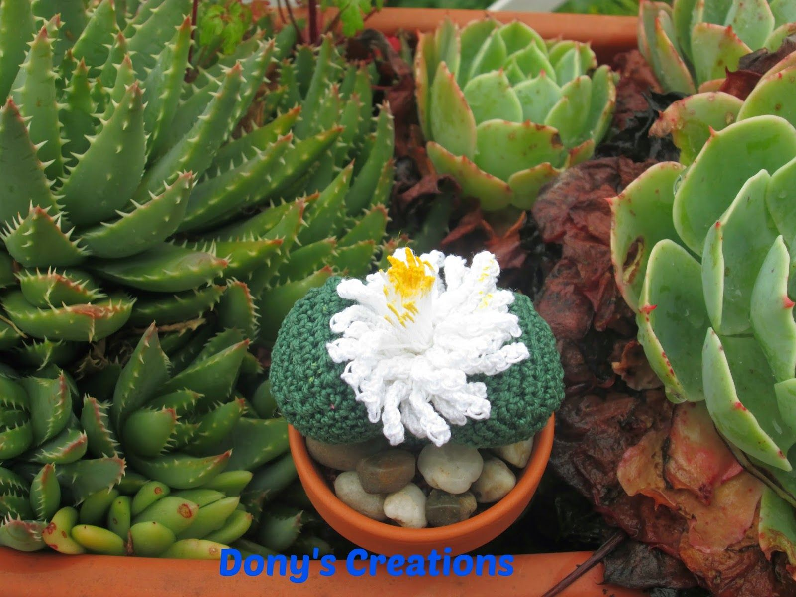Cactus pietra _ pattern free italiano http://donyscreations.blogspot.it