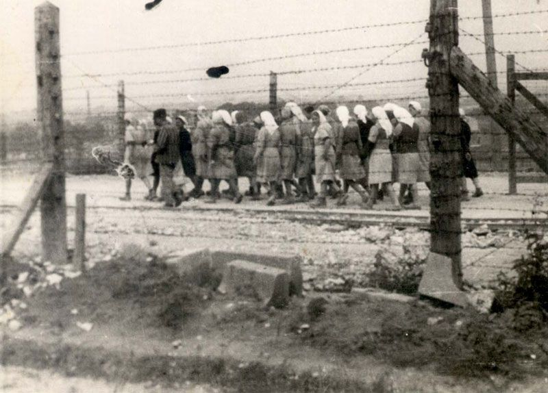 an analysis of the holocaust during the world war two Not only jews were killed during the second world war holocaust  pictures'  summary of the holocaust and anti-semitism, please note.