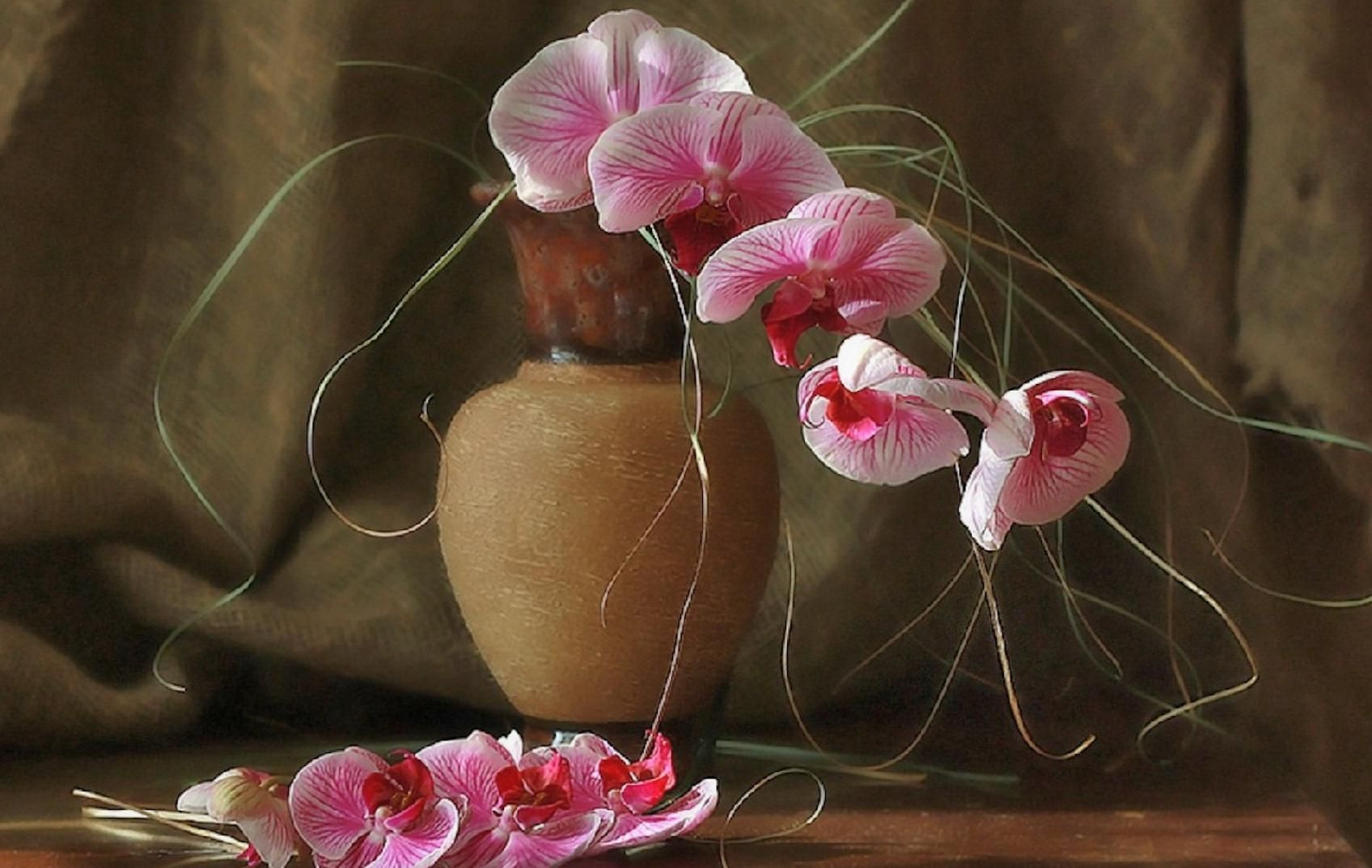 Stilllifewithorchids flowers pinterest orchid and flowers
