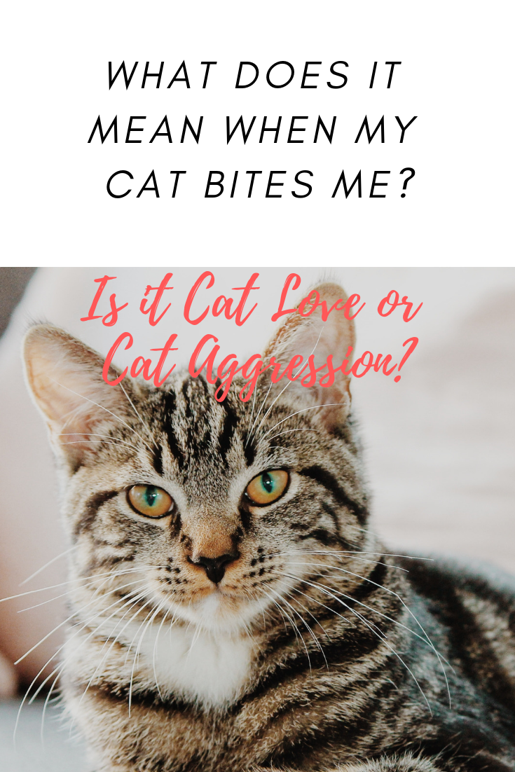 Why Do Cats Give Love Bites Is It Cat Love Or A Sign Of Cat Aggression Cat Love Bites Can Be Annoying And A Comple In 2020 Cat Biting Cat With