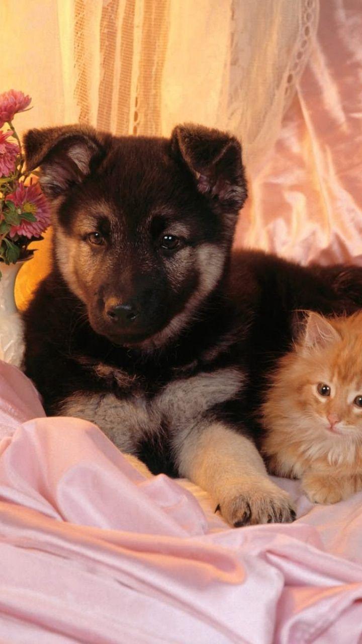 dog, cat, couple, friends