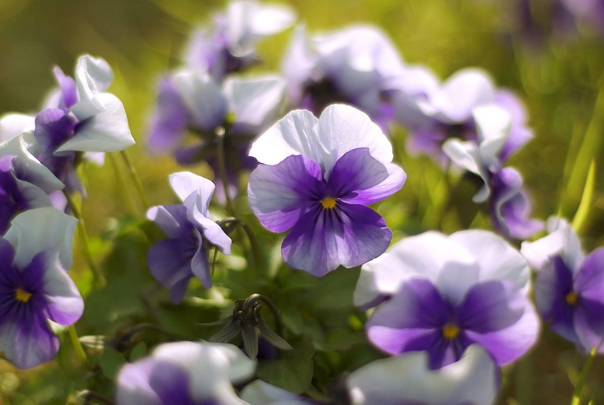 The Most Popular Color As Their Name Says Is Violet But The Violet