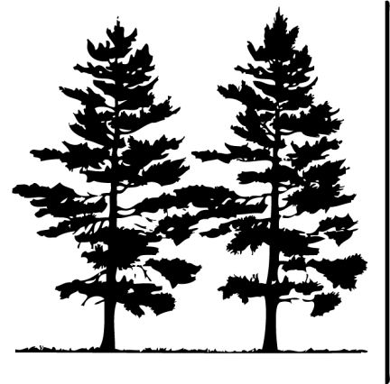 Pine tree realistic. Free clip art pictures